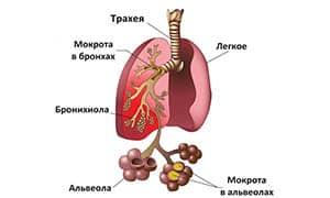 kurenie-pri-pnevmonii2