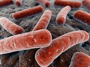 Возбудитель туберкулеза - пути заражения.