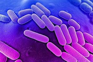 Симптомы и лечение клебсиелла пневмонии